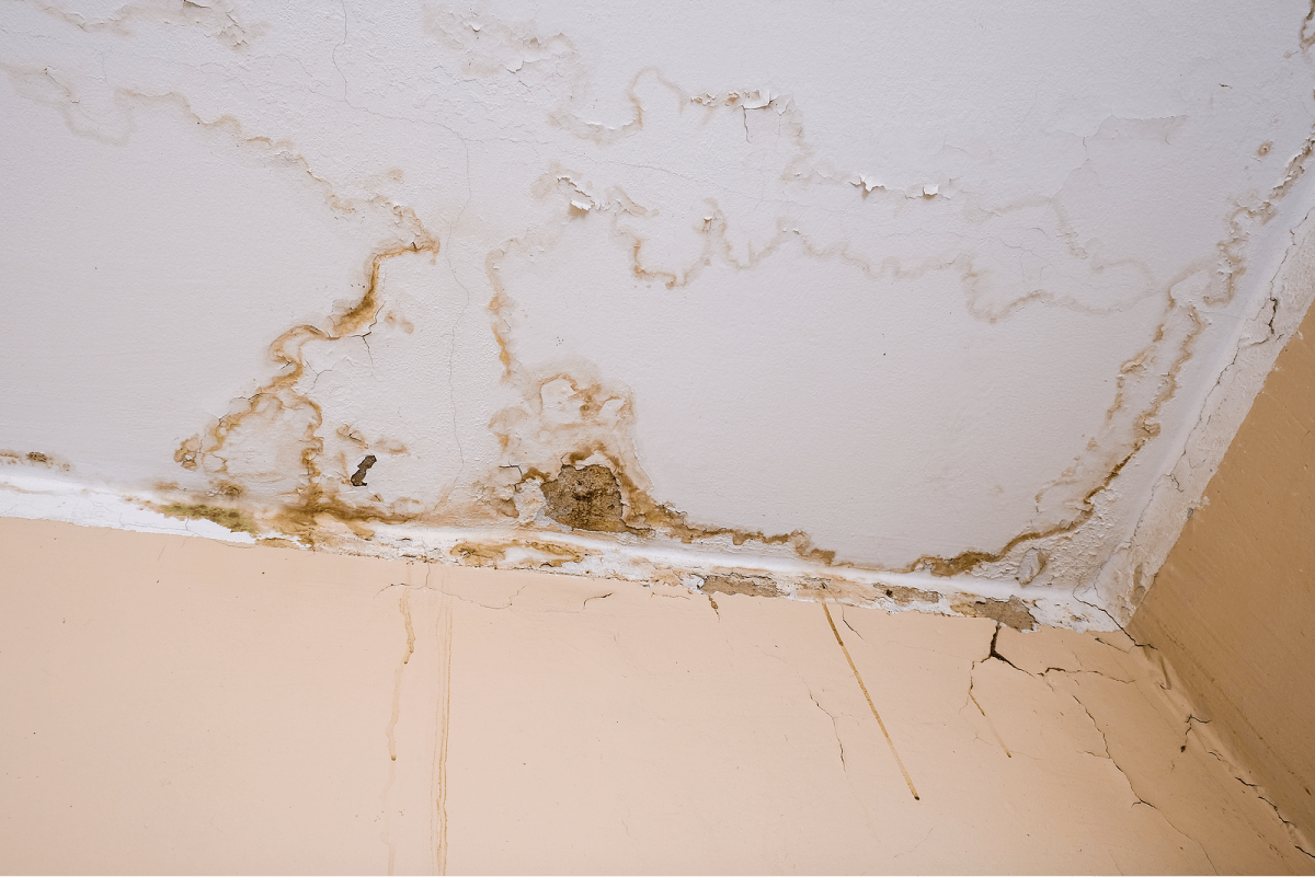 Water Damage Removal Paola