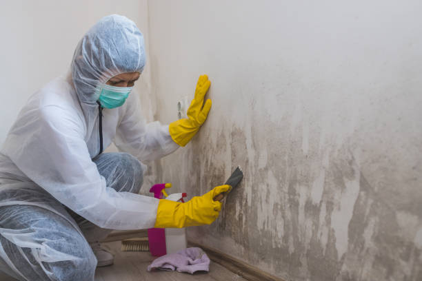 Commercial Mold Crisis and Damage Overview